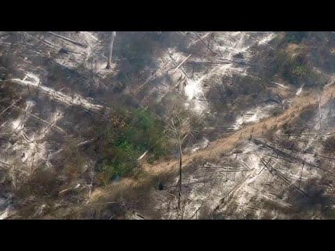 Deforestation in Amazon skyrockets to 12-year high