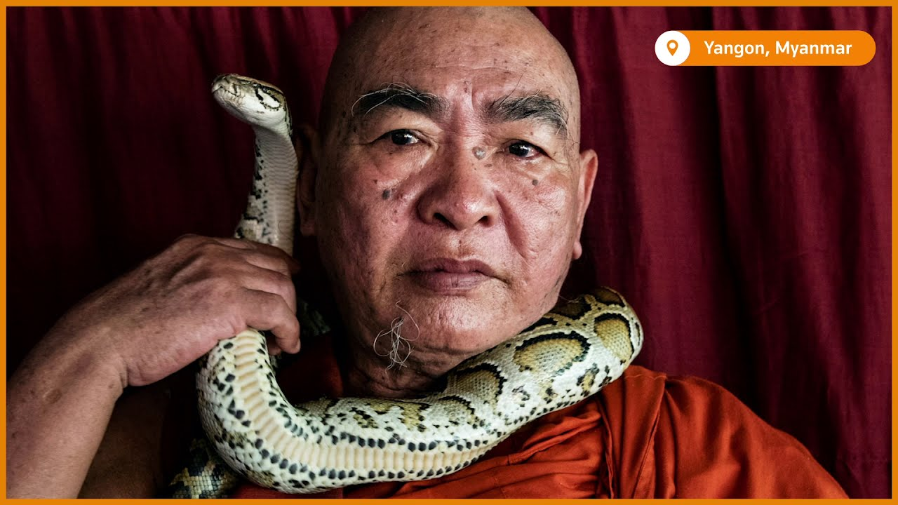 SLIDESHOW: Myanmar monk offers temple sanctuary for threatened snakes