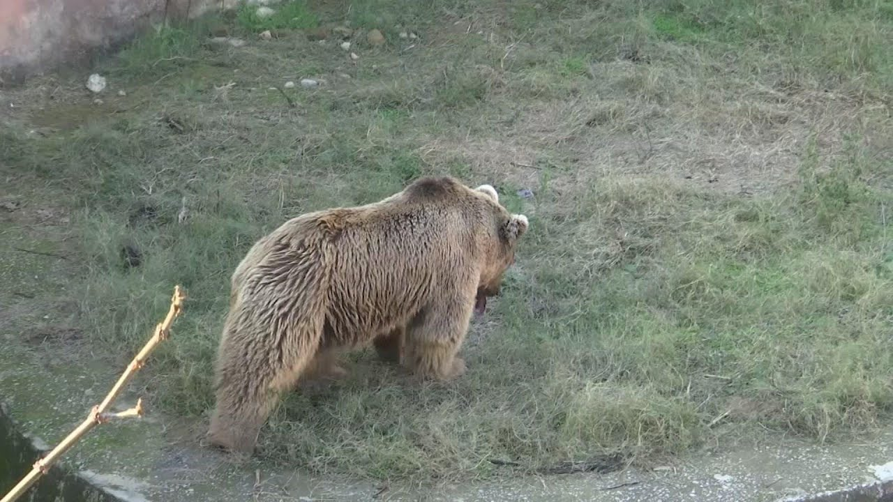 Sick brown bears leave notorious Pakistan zoo