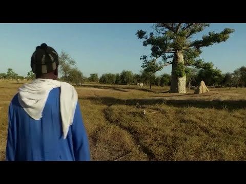 Climate change gives Senegal's herders a good year