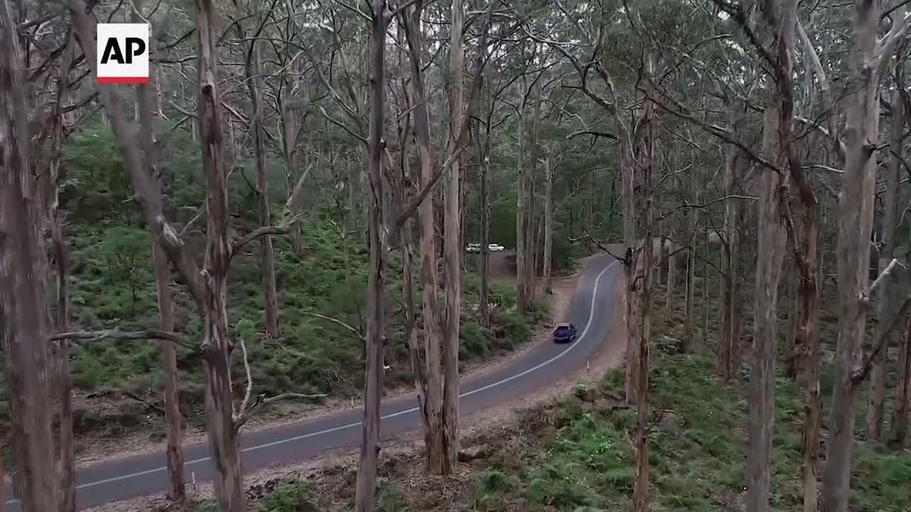 Antiguo bosque australiano podría ser devuelto a la naturaleza
