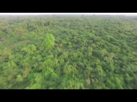 What is Africa's Great Green Wall?