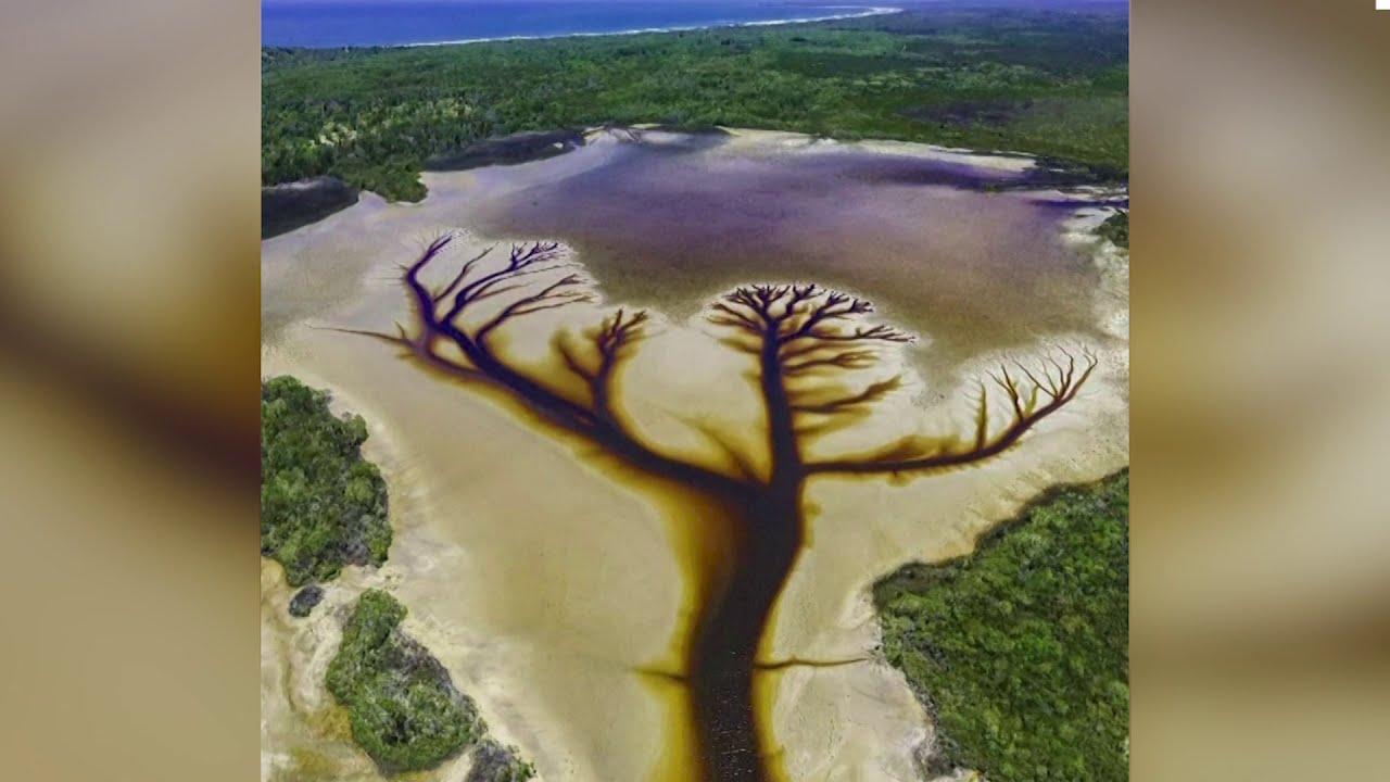 Wondrous tree shape spotted in Australian lake