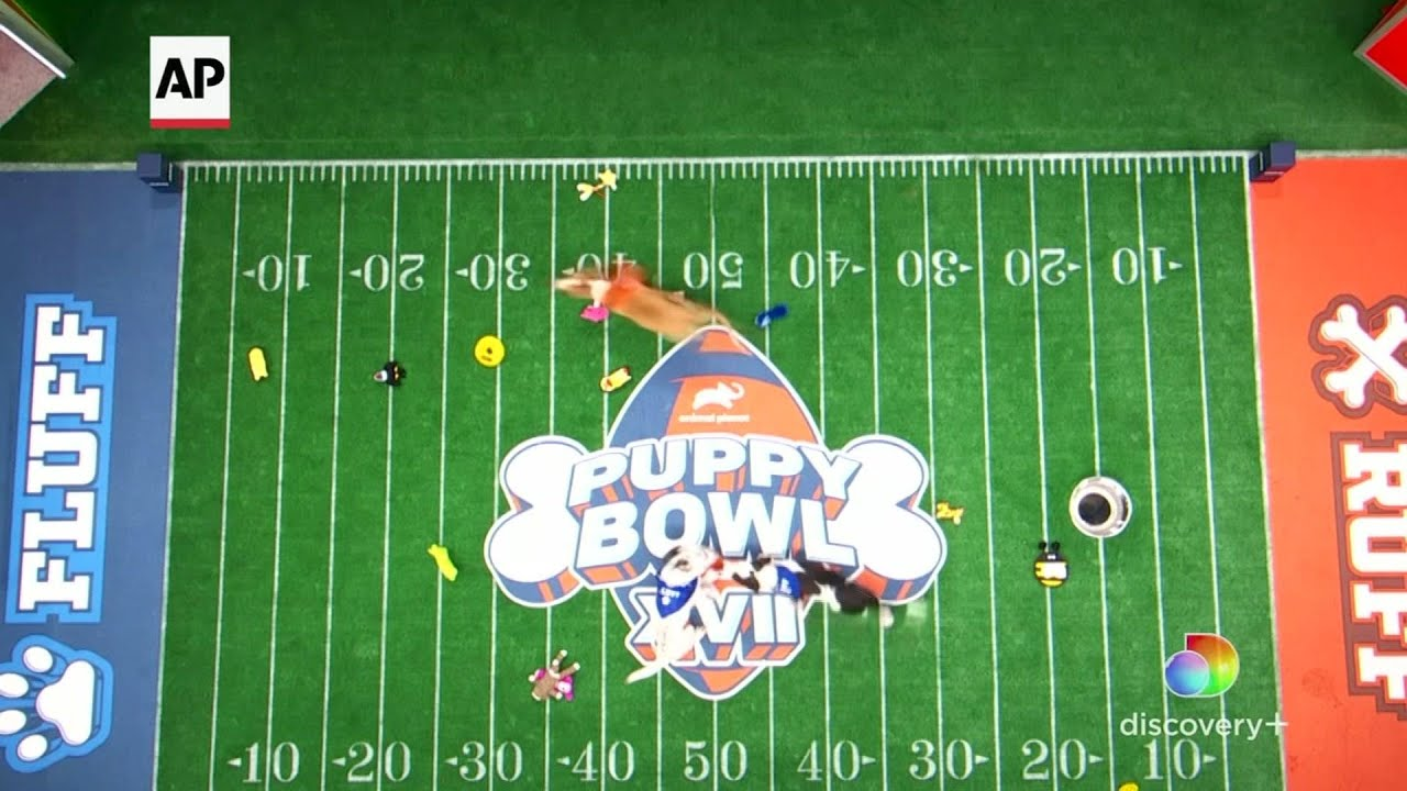 Puppy Bowl goes ahead with COVID protocols