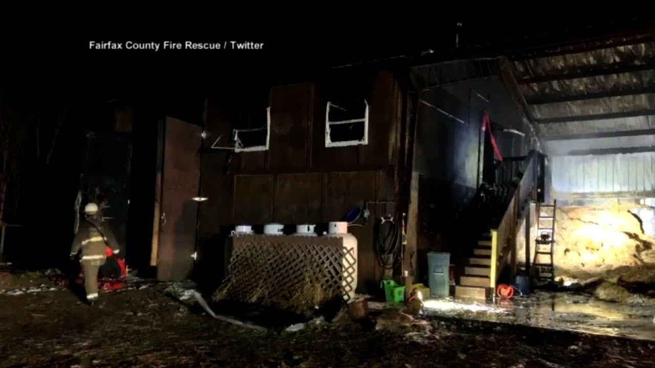 Two giraffes dead after Virginia zoo barn fire