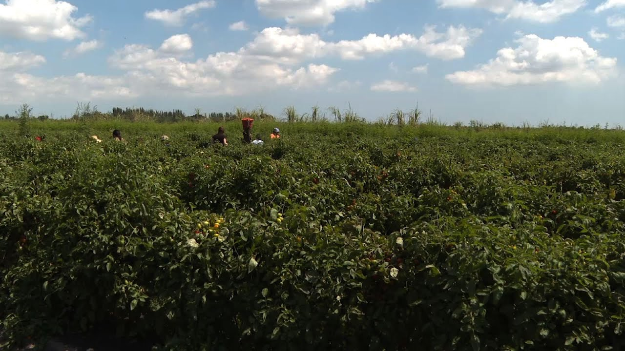 Groups rush to get Florida farmworkers vaccinated