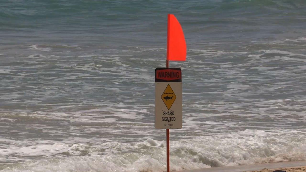 Hawaii beach closed as sharks attack whale carcass