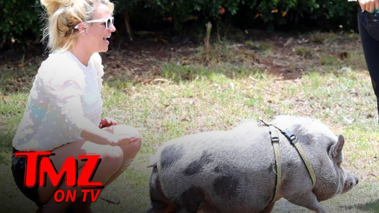 Britney Spears Befriends a Pig While Vacationing in Hawaii   TMZ TV